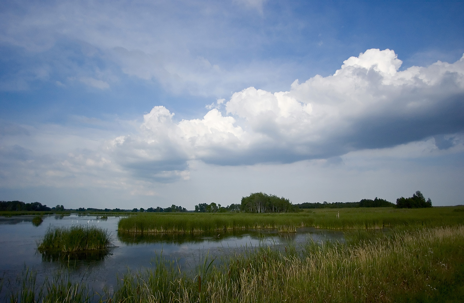 Horicon Marsh, a birding hotspot in Wisconsin