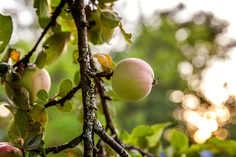 12 Orchards to Visit in Wisconsin in 2019
