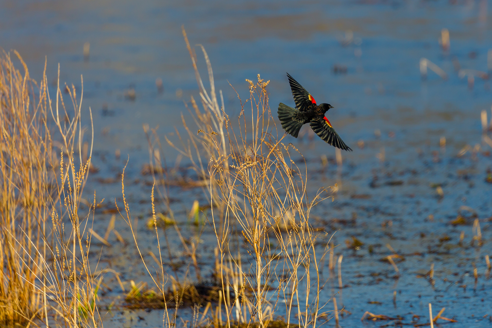Wisconsin Birds and Where to Find Them This Spring